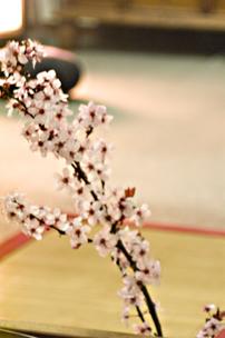 dojo-zen-iniciacions